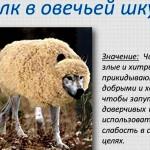 """Православные, сломя голову бросились обсуждать очередную хуцпу, жидиста-хабадника в православной """"шкуре"""", Путина.. Господа, да одумайтесь уже, нельзя же быть такими наивными после 18 лет его вранья и лицемерия."""