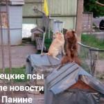 Новости издевательств над Донбасским ополчением.. Донецкие псы сильно приуныли после сообщения о приезде Панина.